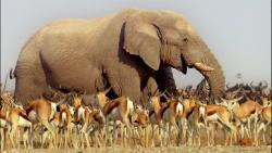 BBC:Africa (2013) 720p.BluRay.x264.DTS-WiKi