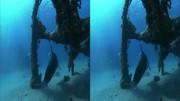 Dolphins In The Deep Blue Ocean (2009) 3D.BluRay.HSBS.1080p.x264-CHD3D