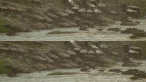 The Wildebeest Migration Natures Greatest Journey (2012) 3D.1080p.BRRip.x264.AC3-TVnRG