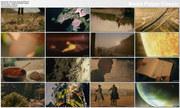 Cuda ¿ycia / Wonders of Life (Season 1) (2012) PL.HDTV.1720p / Lektor PL